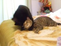 OMG! Sqquuueeeee! Cat bath! 2010