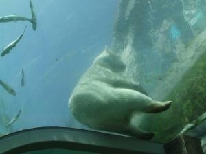Oh, Polar bear.