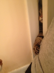 "Sookie re-enacts everyone's favorite scene from The Shining. ""Here's Kitty!!"""
