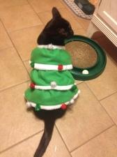 Oh, Christmas tree, Oh, Christmas tree