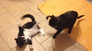 The standoff