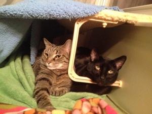 Couples sauna time.