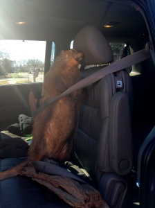"W. Charles Marmota says, ""Click it, or ticket."""