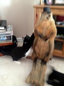 Noooooooo, kitten!