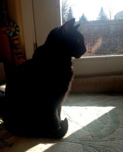 Black cat in sunlight, harbinger of spring.