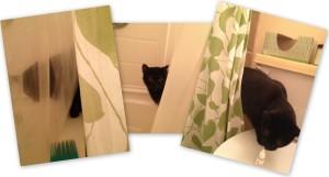 Cat camoflouge