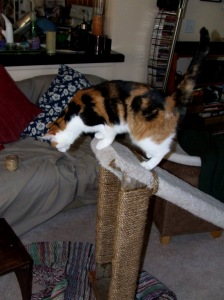 Birdie demonstrates. She was a big advocate for leaving the ramp in the living room.