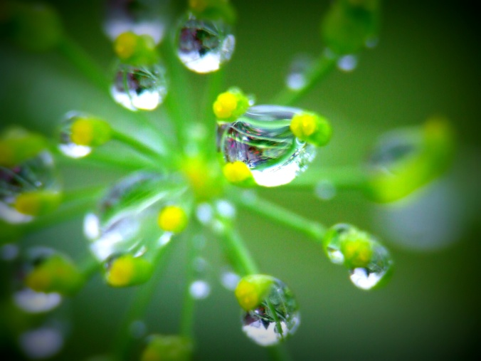 Stunning when boosted plus you can see the rest of the garden upside down in the raindrops.