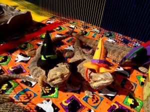 Level 4 Wizard Lizards