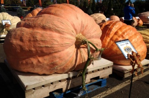 It just seems like a giant pumpkin tumor at this point. Jabba Pumpkin