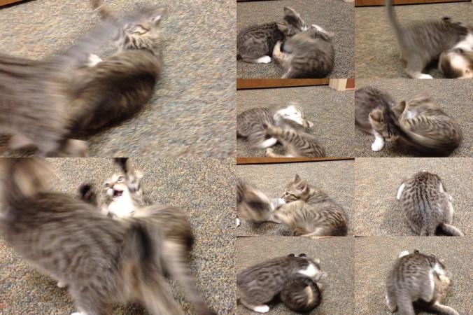 Kitten wrestlin'