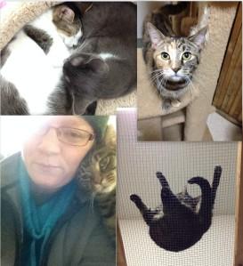 Carousing with strange cats.