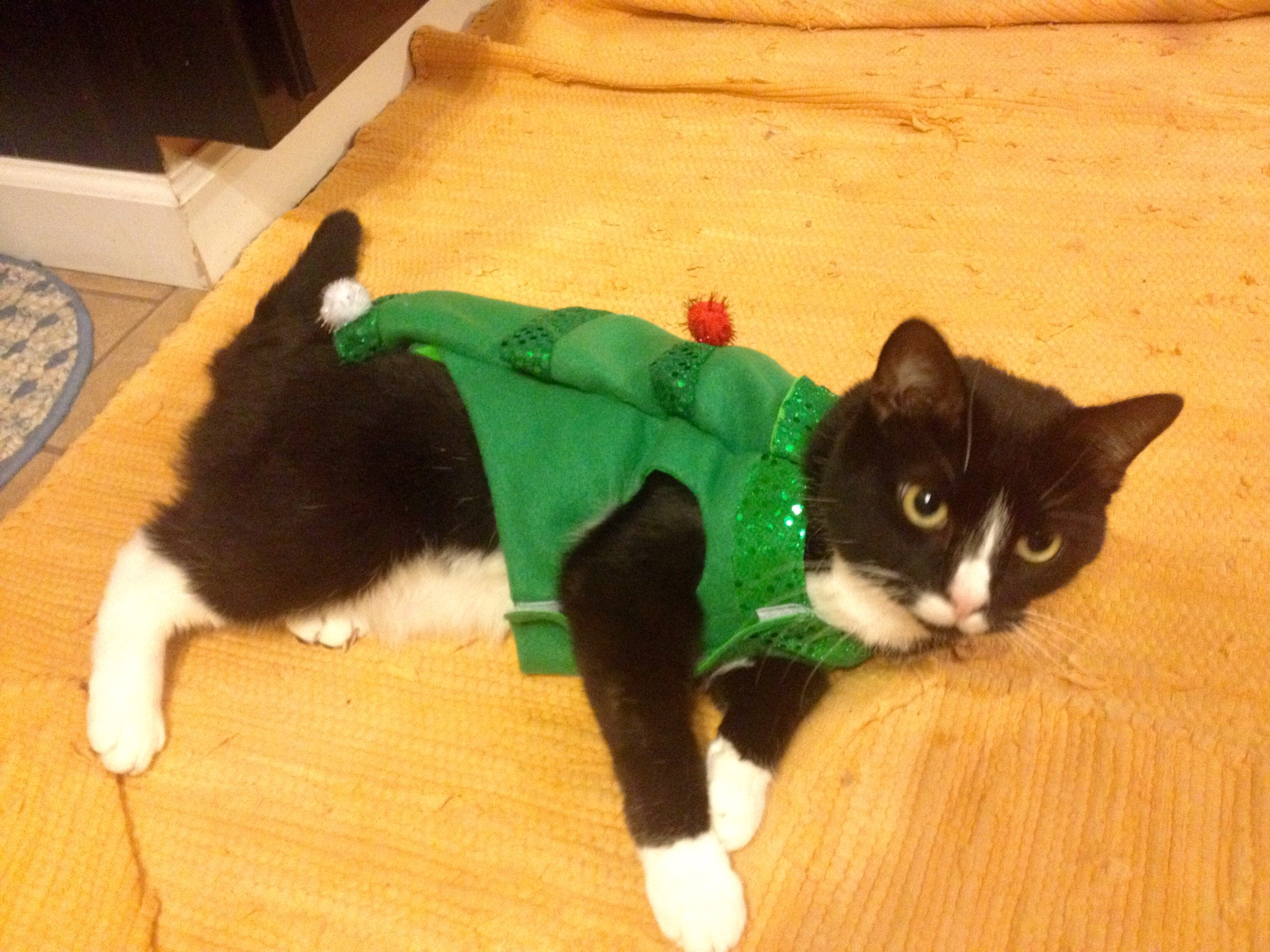 cat in pain meow