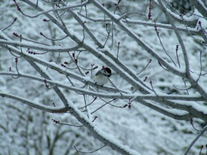 The chickadees always seem to be first.