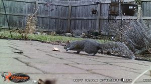 Mr. Squirrel on the hunt.
