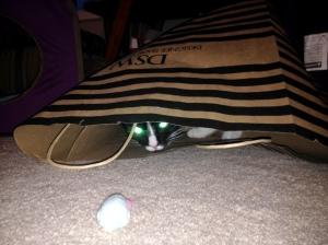Laser cat!