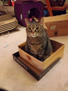 If it fits, it sits.