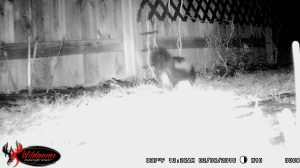 12:28 a.m. The skunk is more of a night owl party animal.