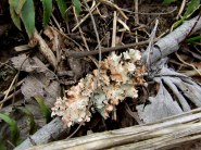 Likin' some lichen