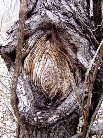 Tree vagina
