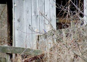Find the bluebird.