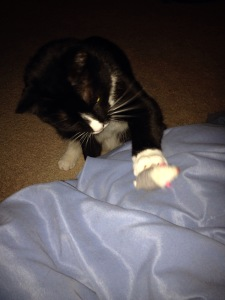 She set mousie on my leg, waited for me to throw it, got impatient and started smacking it.