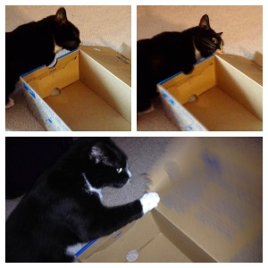 Why not shred a shoebox too?