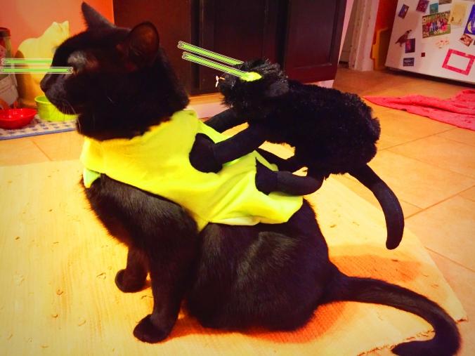 Laser Cat Twins Unite!