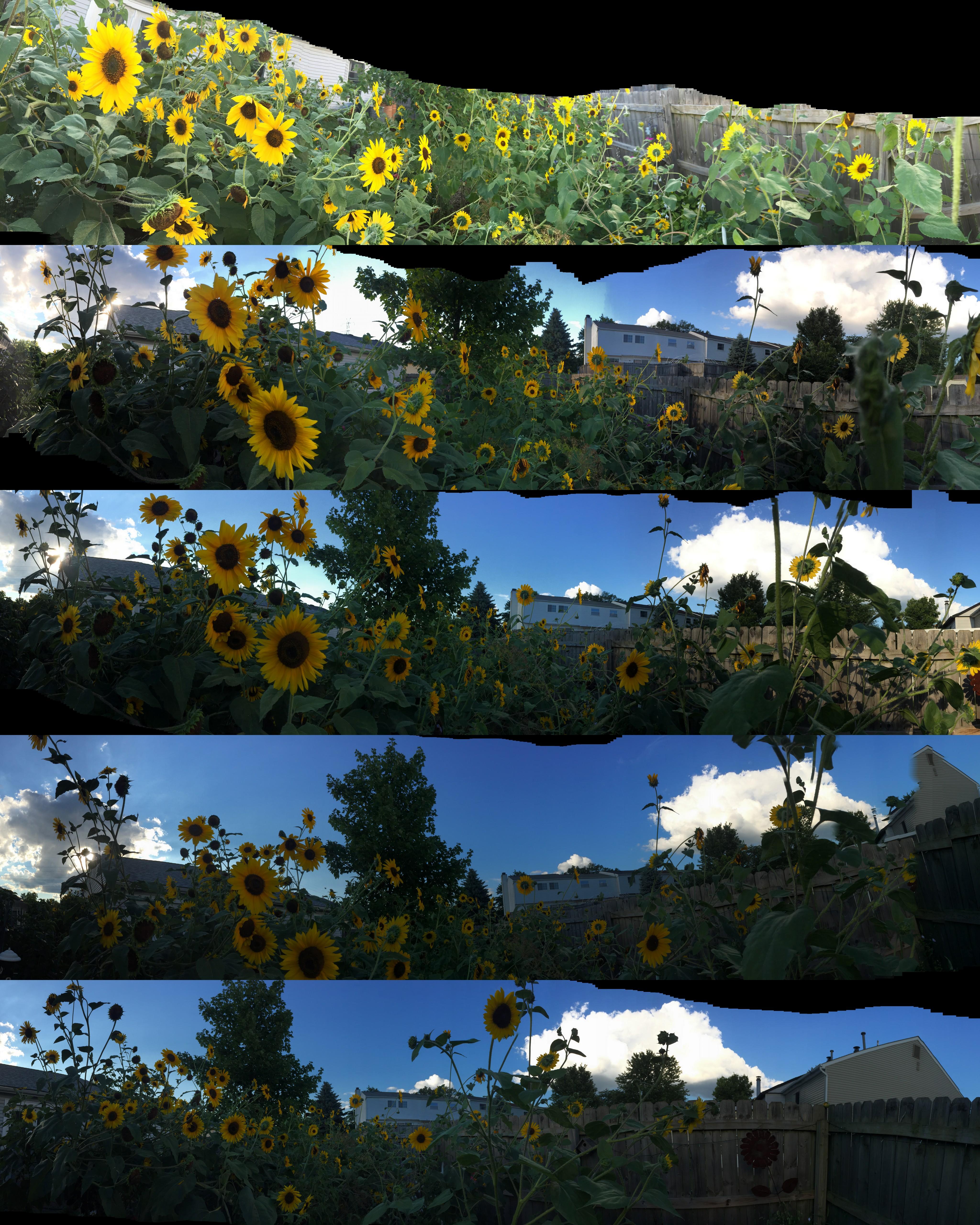 sunflowerjungle