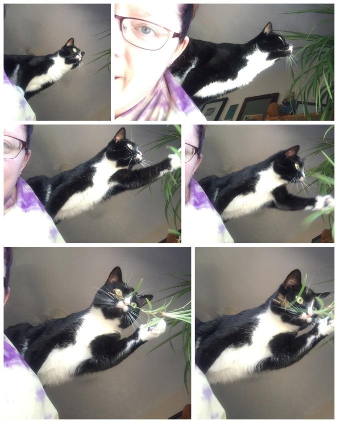 castle cat 3